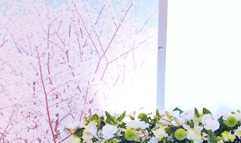 白い花々が桜を引き立てる