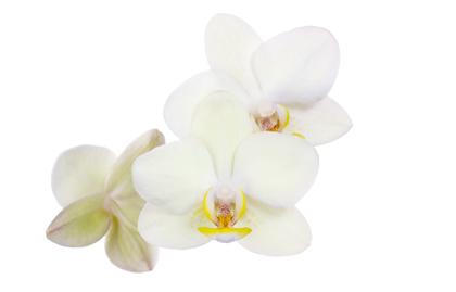 hanasaidan20160212_flower
