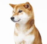 愛犬との写真をパネルにして頂いてとても嬉しかった